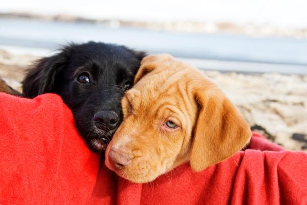 Valentine's dogs \ CT pet photographer