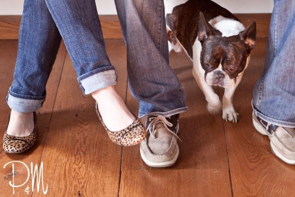 Bulldog | CT pet photographer