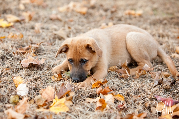Puppy max in grass and leaves | CT pet photographer